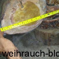 Sandelholz-Kernholz_Heartwood_Santalog
